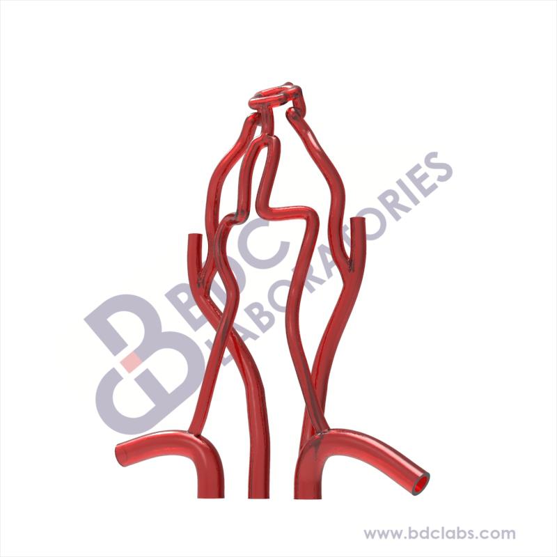 Carotid Arteries and Circle of Willis (SANVV-H) Image